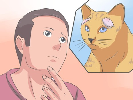 Recognize-and-Treat-Ringworm-in-Cats-Step-13